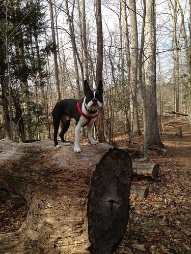 Charlie's First Trip to Poco Feb 2013 (37)
