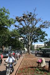 Stork Nests, Kampala