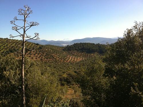 Campiña de Alcaudete y Sierra Nevada