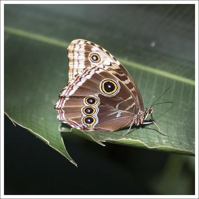 Monteverde 2013-02-16 4
