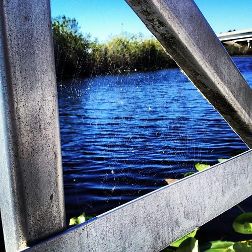 Almost invisible #spiderweb. #everglades #florida #igersftl