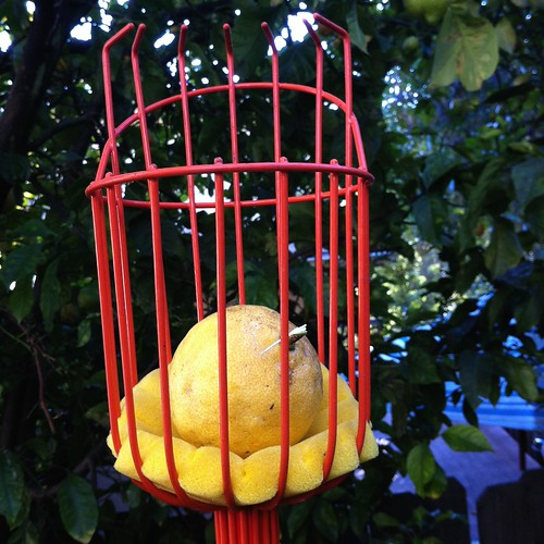 Lemon in a basket
