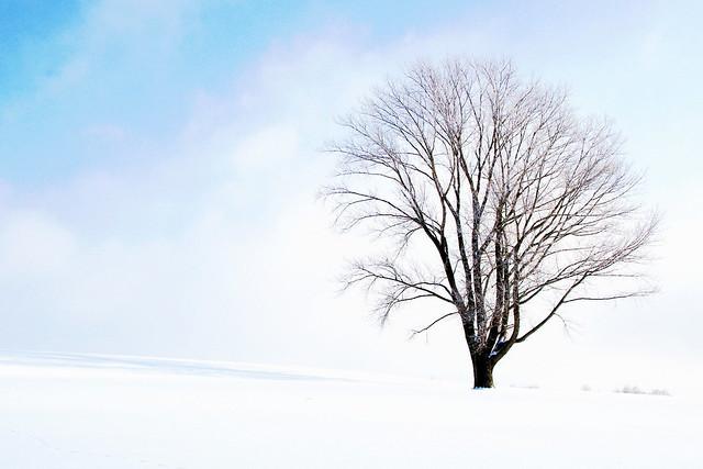 霧氷の哲学の木1