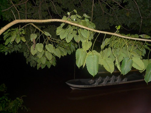 The night time cruise on the Kinabatangan River