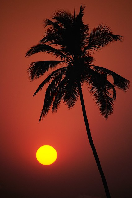 Gold 'n' Palm