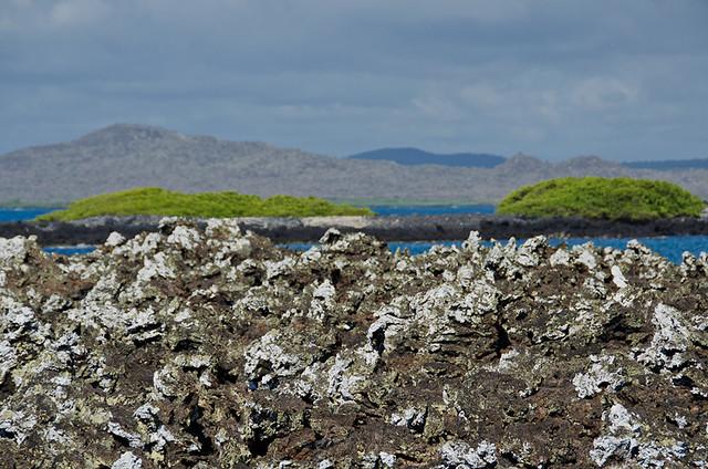 Galapagos: Las Tintoras, Isla Isabela