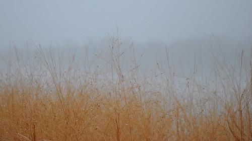 fog washingtondc