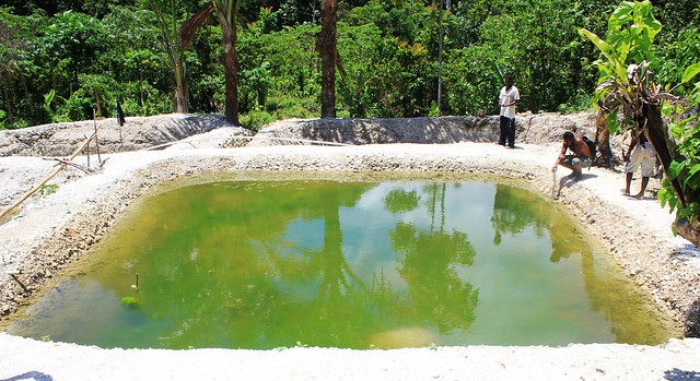 Farming Tilapia In Malaita Solomon Islands Photo By