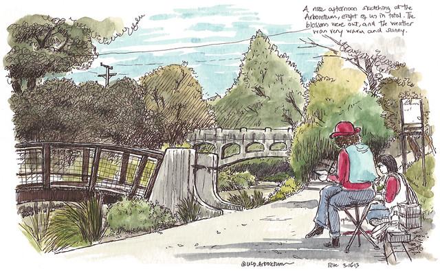 sketching the arboretum