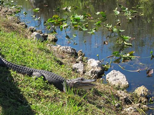 EvergladesNP - 24