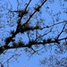 Bromeliads against the sky - bromelias en el cielo; entre Santa María Temaxcalapan y Villa Alta,  Región Sierra Juárez, Oaxaca, Mexico por Lon&Queta