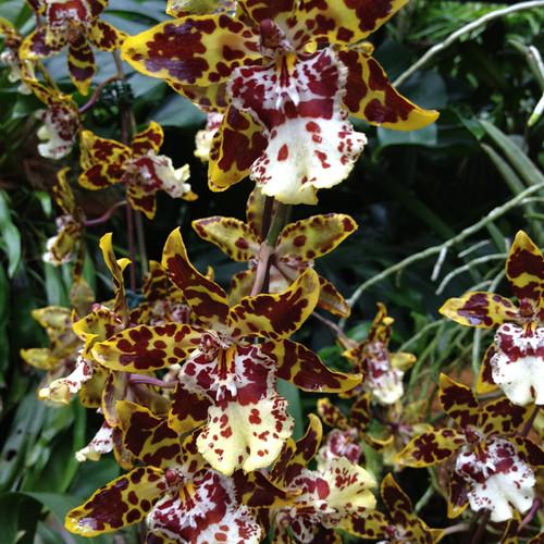 Singpore Orchid Garden 4