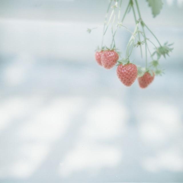*strawberry