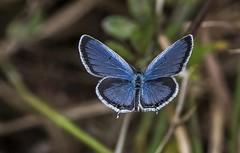 Stunning Blue