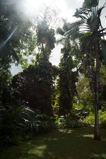 BotanicalGarden-7