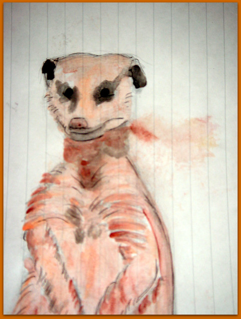 06-Meerkats and Owls Gufo, gufetto, suricato, suricati,