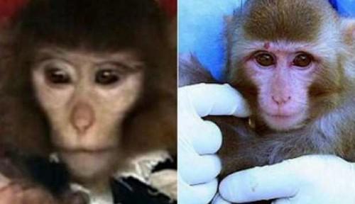 L'Iran lancia una scimmia nello spazio: forse un fake