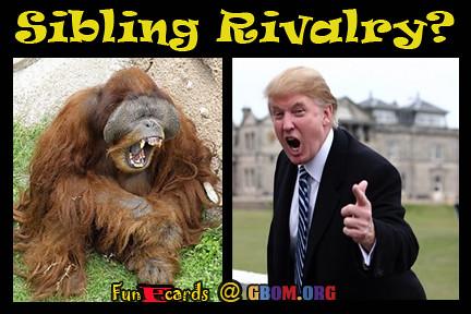 Donald Trump Sibling rivalry with Orangutang.