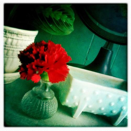 Valentines carnation