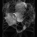 Generative Portrait   Black Triangulation