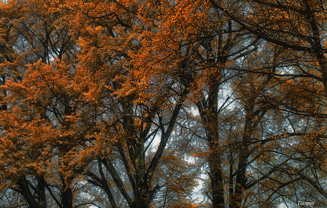 leaves begin to Leave