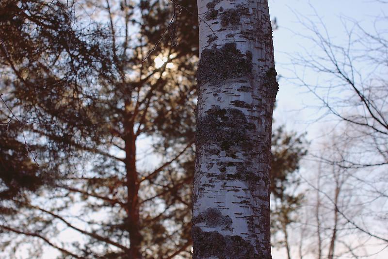 puu joka ei käy kirkossa