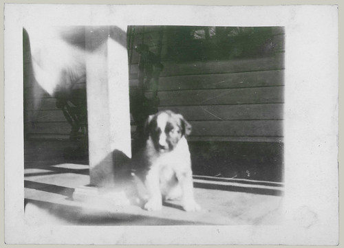 Puppy on the porch