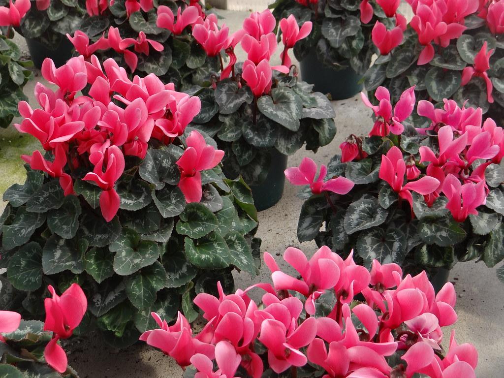 Anatomy Of A Spring Color Bowl Powell Gardens Kansas Citys