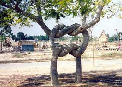 weird_trees09