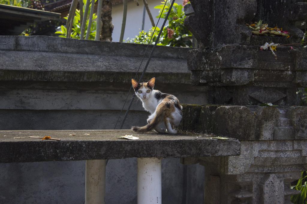 skinny cat | Terry Jinn | Flickr