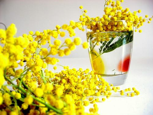 Mimose by Norda Brilo
