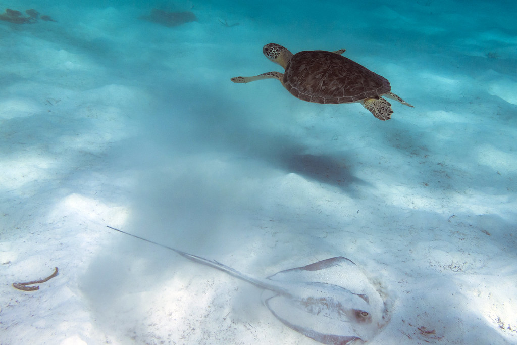 Turtle, meet Stingray