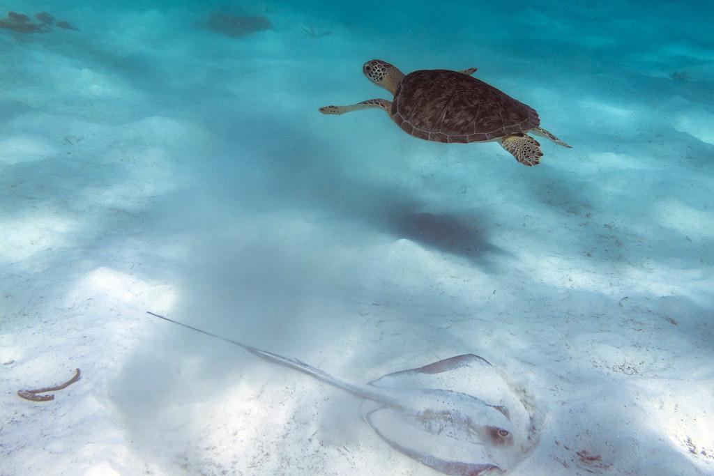 Turtle, meet Stingray