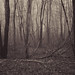 Deep Dark Woods by Dorothy Jarry