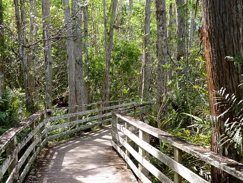 nature florida swamp corkscrew sanctuary audubon birdiwatching