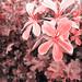 flowers by Verdiana Mancini