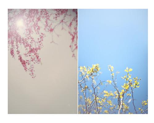 Spring Diptych by islandgirlsj