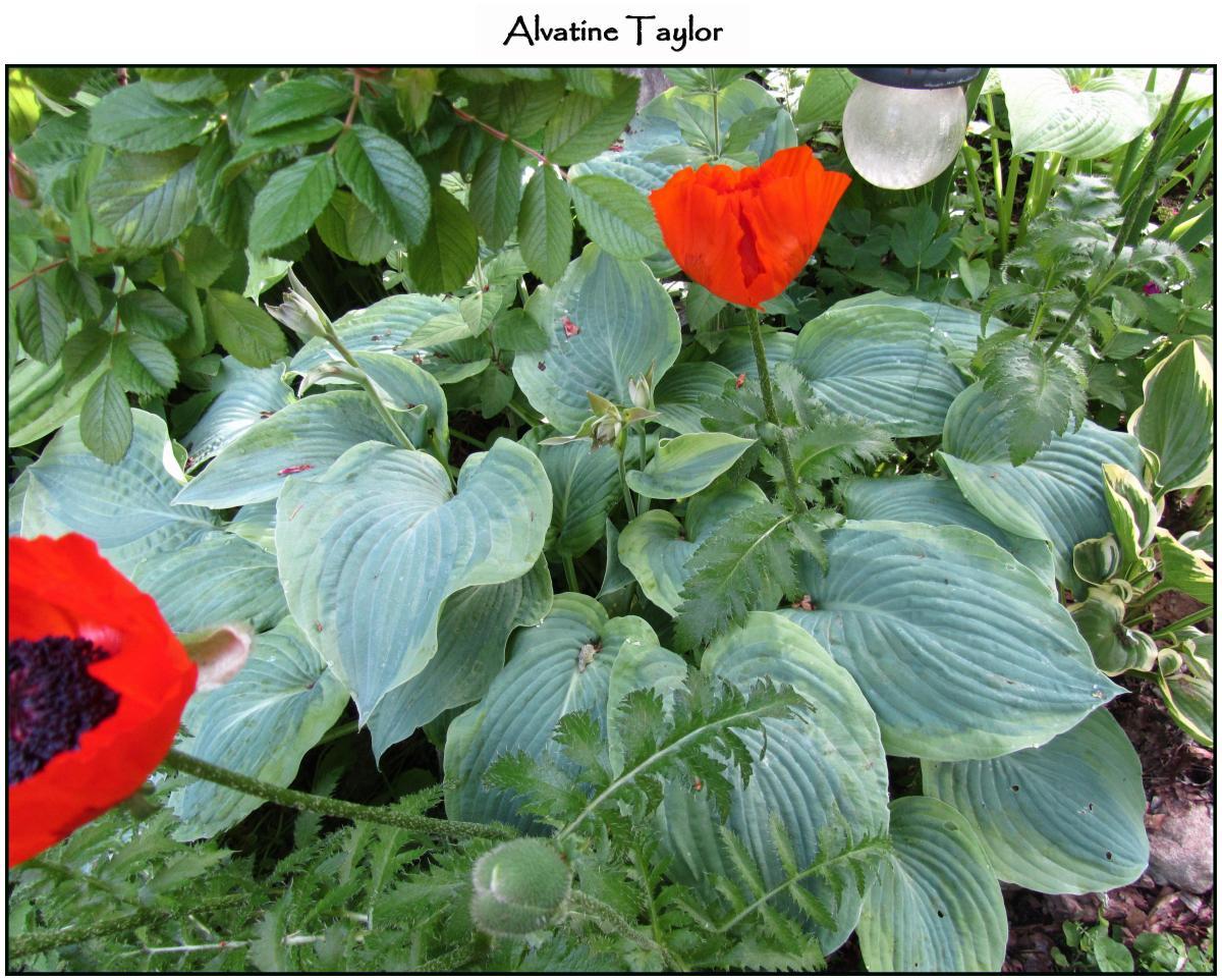 Alvatine Taylor 6-21-12 (33)