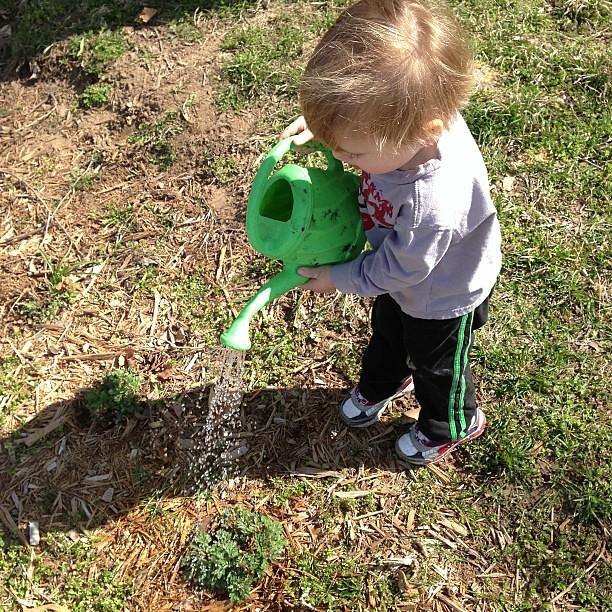 Toddler chores. #gardening