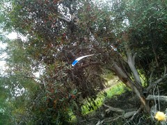 wingtip in tree!