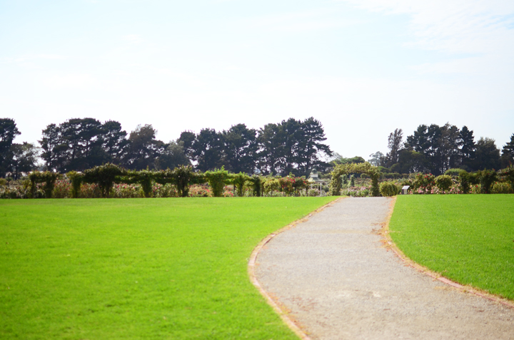 walk to rose garden path