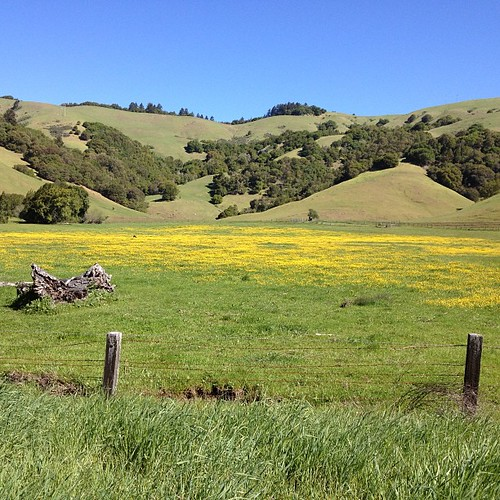 Springtime #marin #northerncalifornia #aidslifecycle #teamunpopular