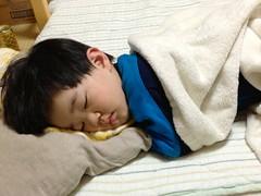 昼寝するとらちゃん 2013/4/15