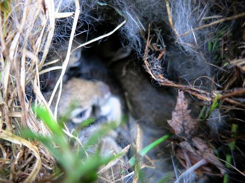 bunnies2-0413