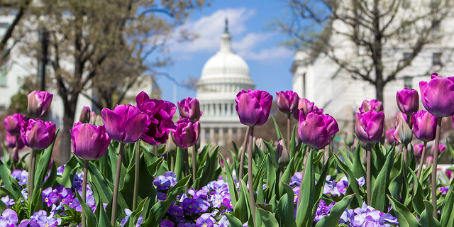 Spring in the Nation's Capital
