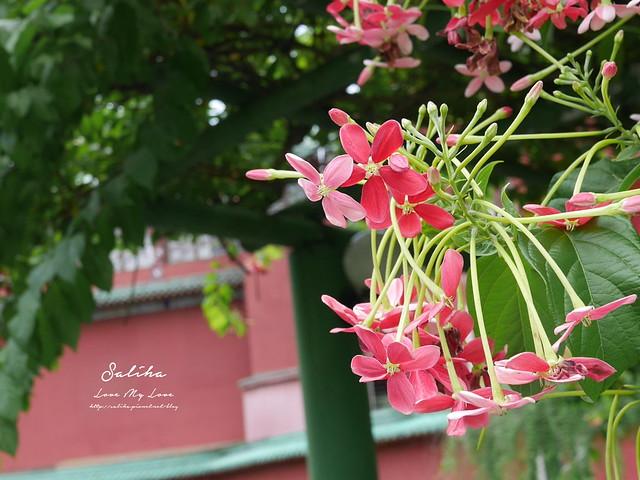台北一日遊景點推薦植物園荷花蓮花池 (25)