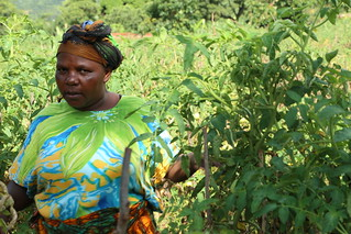 A local farming heroine in Tanzania's Babati district,Galapo Village - meet Monica Paschal