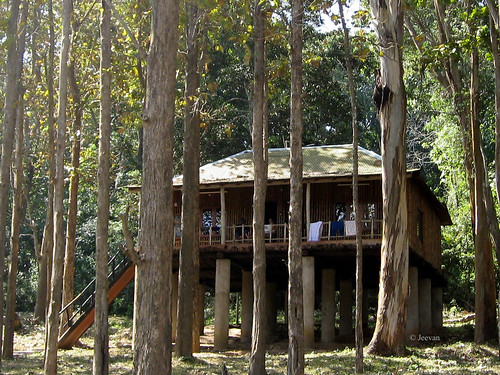 Topslip Tree House