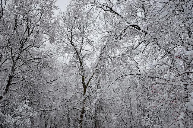 snow webs