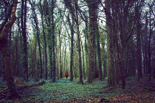 trees ireland girl birds fairytale forest photoshop dark woods deep story haunting cloak 365 crows tale 2013 365project